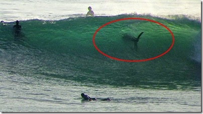 White-Shark-surf-spot-Swami-Beach-San-Diego-California